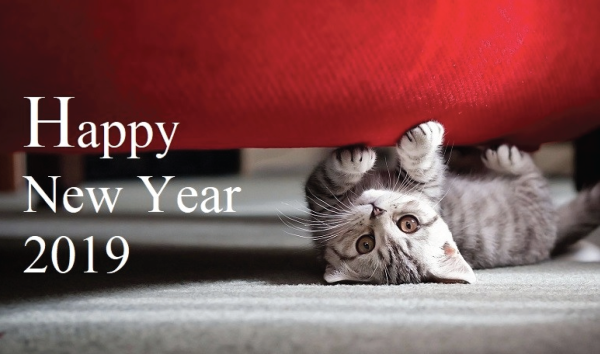 5 New Year's Resolutions For Cat Parents